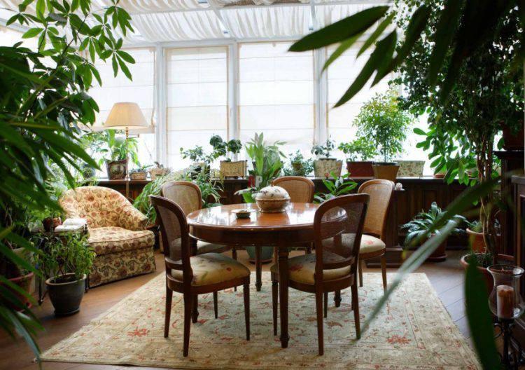 Зимний сад в доме: несколько простых советов